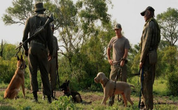 K9 Units, Drones Deployed To Fight Rampant Rhino Poaching - Care2 | Rhino links | Scoop.it