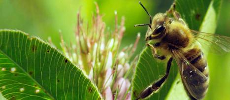 Biodiversité : la loi publiée au Journal officiel | Apiculture, agriculture et environnement | Scoop.it
