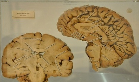The Daddy Brain | Neuroanthropology | Scoop.it