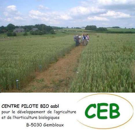 Optimiser le fonctionnement des sols agricoles - CEB | veillaux environnement | Scoop.it