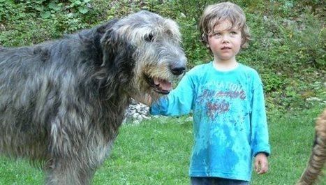 Les paroles d'un enfant après la mort de son chien   Shabba's news   Scoop.it