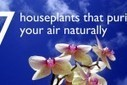 7 Indoor Plants That Purify the Air Around You Naturally | Sustainable Futures | Scoop.it