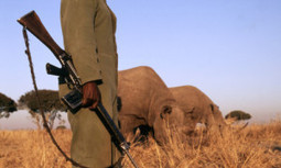 How Improving Local Economy Could Solve Africa's Wildlife Poaching Problem | EcoWatch | Scoop.it