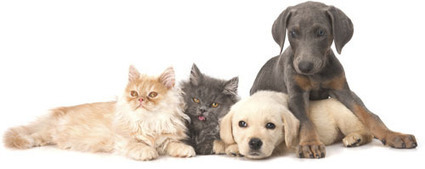 Diabetes in Cats and Dogs: What Pet Parents Need to Know » Boulders Natural Animal Blog | cats & dogs! | Scoop.it