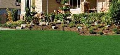 Zoysia Grass Plugs Reviews | Zoysia Grass Plugs Review | Scoop.it