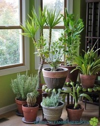 Home plants and types of interior - match them correctly!   House Cleaning Services - Blog   Home decoration   Scoop.it