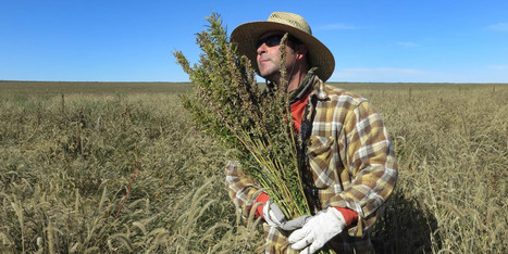 This Is What The End Of Hemp Prohibition Looks Like | Cânhamo Industrial | Scoop.it