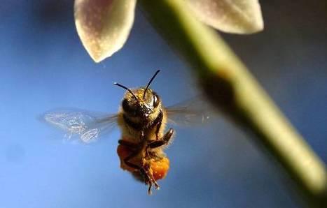 US beekeepers lost almost half their honeybees last year   sustainablity   Scoop.it