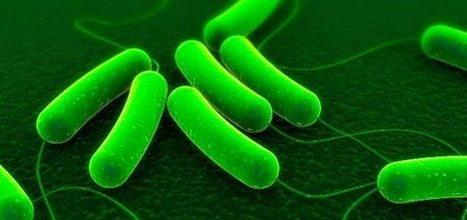 'Merci l'ingé', épisode 7 : avec les bactéries, stop au gaspi ! | Economiser l'énergie | Scoop.it