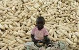 Malawi's maize output seen up 8 percent year-on-year | MAIZE | Scoop.it