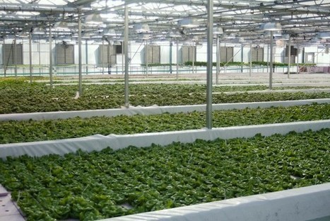 Wisconsin's Future Farm Packs Sustainable Punch with Cow Powered Aquaponics Operation | Aquaponics World View | Scoop.it
