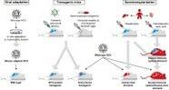 HCV animal models and liver disease - Journal of Hepatology | Hepatitis C New Drugs Review | Scoop.it