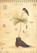 'Flora Fantastica: The Whimsical Botantical Art of MF Cardamone' on view at Philly museum | Botany Whimsy | Scoop.it