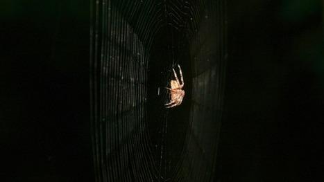 Le pouvoir d'attraction caché de la toile d'araignée | EntomoNews | Scoop.it