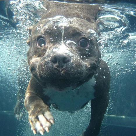 Pictures Of Dogs Swimming | Yalisa Dumont's Empower Network Blog | Making people smile | Scoop.it