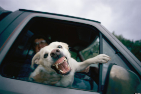 Paw Preference, Agression Linked In Study Of Pet Dogs | Zoology | Scoop.it