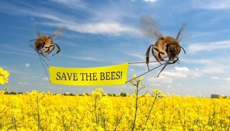 La première autoroute à abeilles inaugurée à Oslo - Magazine GoodPlanet Info | Le monde des abeilles | Scoop.it