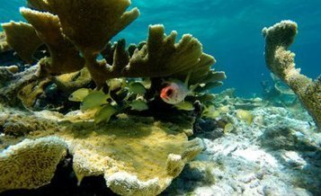 Dying coral reefs threaten the livelihood of millions | Sustain Our Earth | Scoop.it