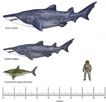 Fossil from 20-foot shark found in Texas | Histoire et Archéologie | Scoop.it