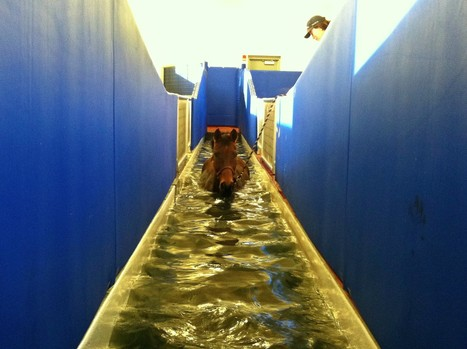 How the Underwater Treadmill Could Revolutionize Event Horse Conditioning | Horse Fencing & Horse Stalls | Scoop.it