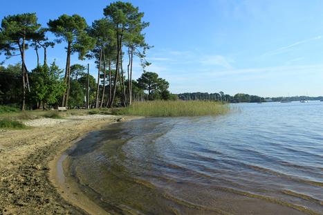 Samedi 15 juin - Découverte à pied de la Forêt usagère de La Teste-de-Buch et du lac de Cazaux | Le Bassin d'Arcachon | Scoop.it