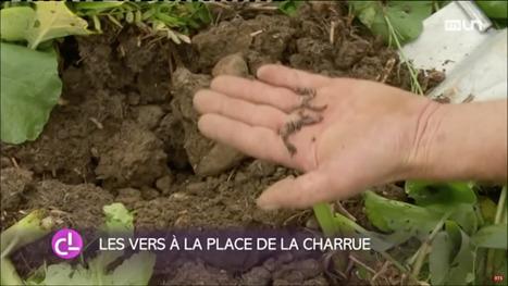 Des agriculteurs labourent leurs champs avec des vers de terre. | Agroécologie | Scoop.it