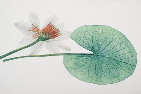 The Glory of Leaves - Rob R. Dunn in National Geographic Magazine | Research from the NC Agricultural Research Service | Scoop.it