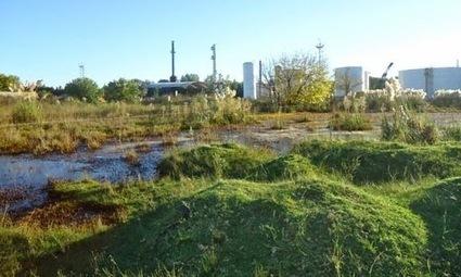 Capital Federal Contaminada | Compromiso medioambiental en La Argentina | Scoop.it