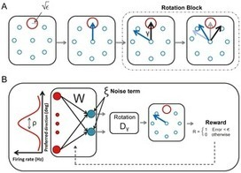 Interference and Shaping in Sensorimotor Adaptations with Rewards | Social Foraging | Scoop.it