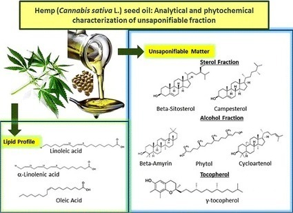 New analysis finds hempseed oil packed with health-promoting compounds | A Tale of Two Medicines | Scoop.it