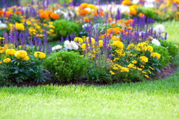 McKay's Lawn Care Service is a great lawn maintenance provider | McKay's Lawn Care Service | Scoop.it