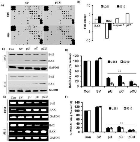 RayBio® C-Series Apoptosis Antibody Array Kits | Neuromics | Scoop.it
