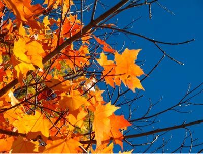 Climate Change and Fall Foliage: Not a Good Match | Climate change challenges | Scoop.it