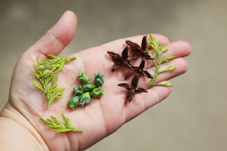 15 Top Wild Edibles That Can Save You in the Wild | Wandering Salsero | Scoop.it