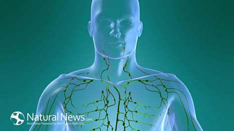 Clean your Body's Drains: How to Detoxify your Lymphatic System | Health | Scoop.it