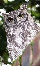 Fun Owl Facts for Kids - Interesting Information about Owls | Educational websites | Scoop.it