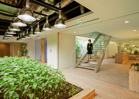 Pasona Urban Farm by Kono Designs | Sustain Our Earth | Scoop.it