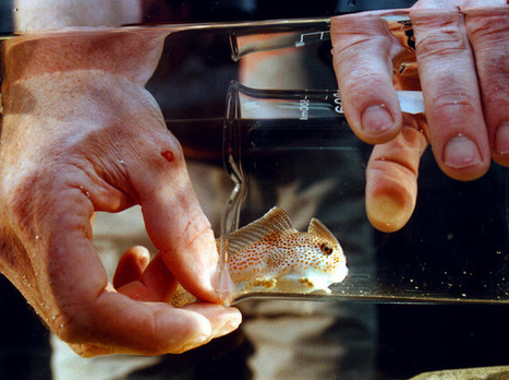 Australia's unusual species | Australian animals | Scoop.it