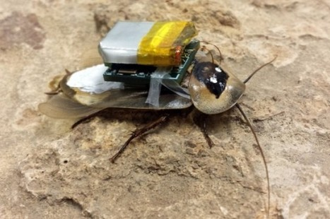 Remote-Controlled #Cyborg #Cockroaches Could Save Lives #tech #Science | Limitless learning Universe | Scoop.it