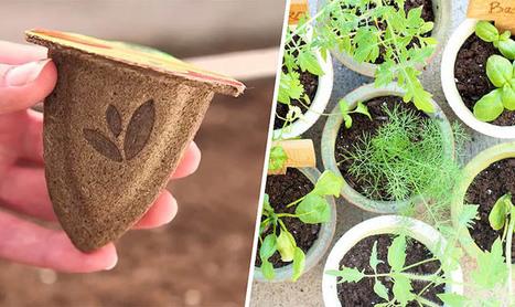 Des pots biodégradables pour un semis éco-friendly   Un monde durable   Scoop.it