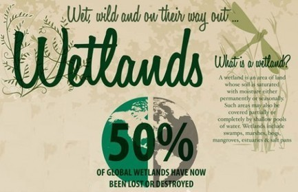 INFOGRAPHIC: World Wetlands Destruction | Development geography | Scoop.it