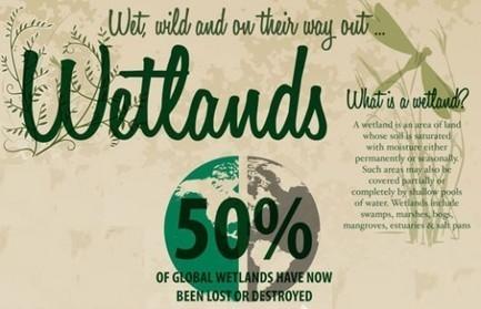 INFOGRAPHIC: World Wetlands Destruction | green infographics | Scoop.it