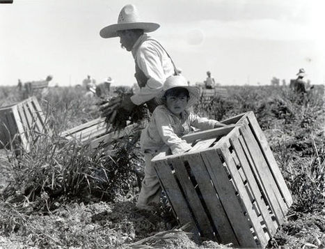 Primary source #2 : A man and young child harvesting carrots in the Imperial Valley during the Great Depression   Picture This   Mexican American During The 1930's   Scoop.it