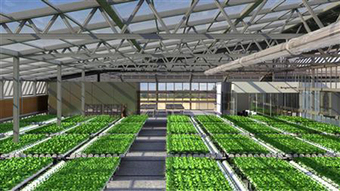 SABC News.com - A farmer in central Kenya is changing farming :Friday 5 July 2013 | Vertical Farm - Food Factory | Scoop.it