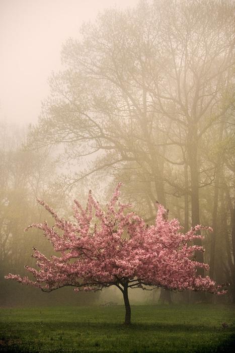Crabapple tree | Harmony Nature | Scoop.it
