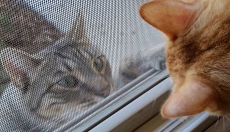 Cats Keep Showing Up At Woman's Door To Ask For Help | Compassion in Action | Scoop.it