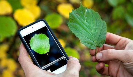 Las aplicaciones móviles que te dicen todo sobre una planta sólo con una foto | gaia | Scoop.it