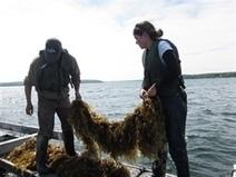 NOAA Sea Grant Awards $1.9 Million for New Aquaculture Projects   Aquaculture Directory   Scoop.it