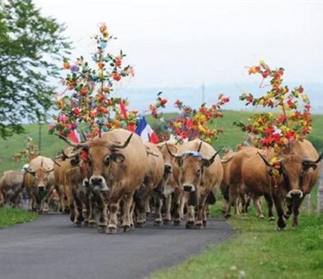 Laissac. Randonnée au cœur de l'estive | L'info tourisme en Aveyron | Scoop.it