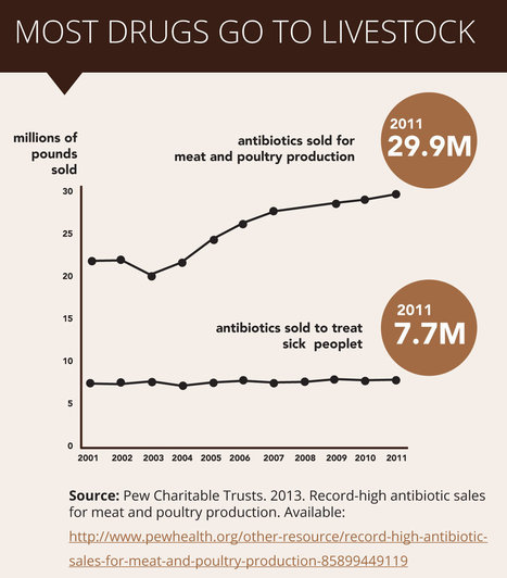 Meat and Antibiotics - 2013 Meat Eaters Guide | Meat Eater's Guide to Climate Change + Health | Environmental Working Group | www.cornucopia.org | Scoop.it